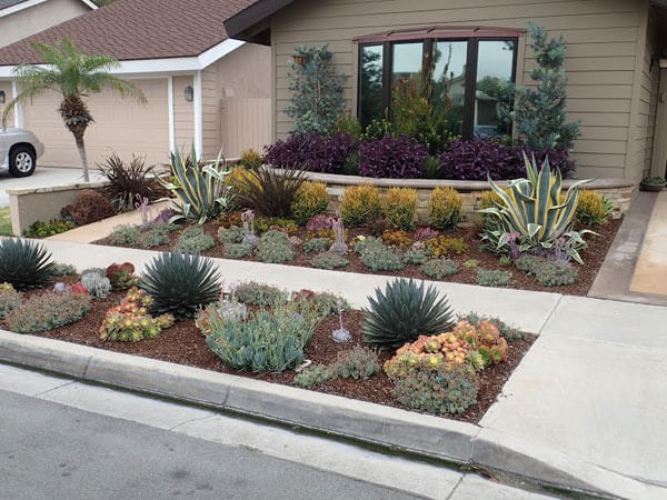 Lawn and landscape procedure manuals drought resistant for Drought tolerant yard