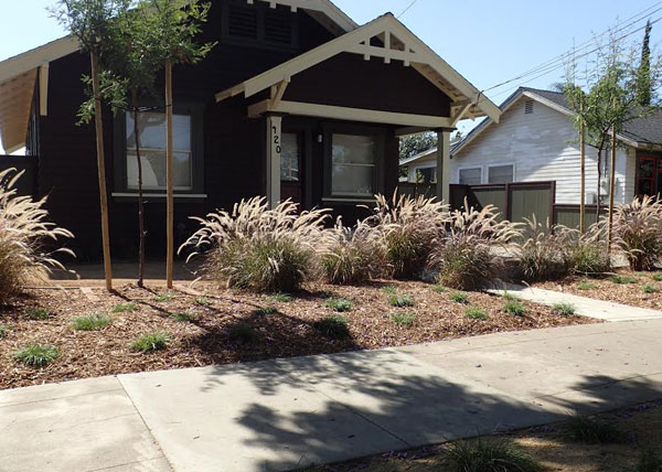 Residential Dwarf Fountain Grass