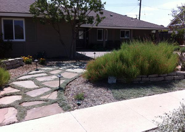 Df landscape gallery drought tolerant landscaping for Low maintenance drought resistant landscaping