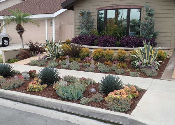 Assorted Agave & Succulents Irvin