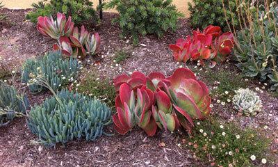 California Native Plants U0026 Trees For Drought Tolerant Landscaping In Orange  County, California